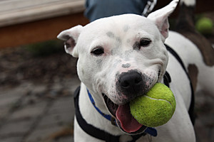 Battersea Dogs Home Attempt To Rehome Abandoned And Stray Dogs